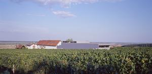 Krutzler Winery Pichler & Traupmann